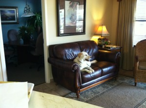 Max relaxing at RE/MAX Premier Realty